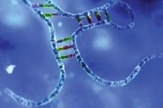 An image dispalying the MicroRNA